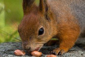 Ořechy, semínka, zelenina aneb chytré mlsání